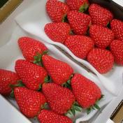 きらぴ香&紅ほっぺ 290グラム×2パック 果物(いちご) 通販