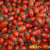 濃密な味わい♪ 薄皮のミニトマト!スパルタ生まれのひみこ 1.5kg入り 1.5kg 野菜(トマト) 通販