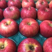 【人気】青森県産りんご「シナノスイート」家庭用 キズ有 約5kg 5kg 果物や野菜などのお取り寄せ宅配食材通販産地直送アウル
