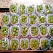 シャイン2パック3000 350グラム✕2 果物や野菜などのお取り寄せ宅配食材通販産地直送アウル