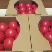 やさしい風の農薬不使用自然栽培大玉トマト 約3.3キロ 野菜(トマト) 通販
