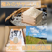 10kg予約限定 新米 大粒厳選!低温熟成乾燥!極みのササニシキ 令和3年度産 10kg(精米すると1割目減りします) 山形県 通販