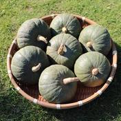 栽培期間中、肥料・農薬不使用 ミニかぼちゃ (ほっこり姫) 約4kg 群馬県 通販