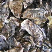 長崎産 大村湾殻付き牡蠣セット3kg(ご自宅で牡蠣焼き) 3kg 魚介類(牡蠣) 通販