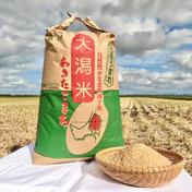 【今年は大粒を選抜】優しい甘みの 新米あきたこまち玄米30㎏特別栽培米減農薬減肥料県基準6割減 玄米30㎏ 果物や野菜などのお取り寄せ宅配食材通販産地直送アウル