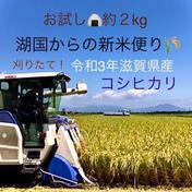 お試し♪令和3年滋賀県産減農薬栽培コシヒカリ約2kg白米新箱 箱込みコシヒカリ 白米2kg 滋賀県 通販