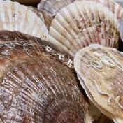 漁師の店 養殖ホタテ2年貝極上特大サイズ4kg 4kg