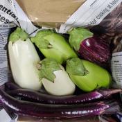 お試し 茄子4種食べ比べ 8本 野菜(茄子) 通販