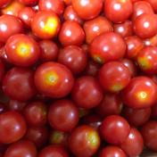 訳あり【自然栽培】神子原ミニトマト(1kg) 1kg 野菜(トマト) 通販