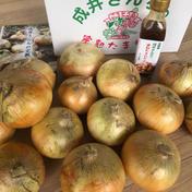 成井さんちの完熟たまねぎサラダセット 4.21kg 果物や野菜などのお取り寄せ宅配食材通販産地直送アウル