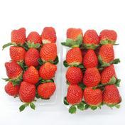 とっても貴重な10月のかおり野イチゴ(小~中サイズ) 2パック合計560g 小~中サイズ 果物や野菜などのお取り寄せ宅配食材通販産地直送アウル