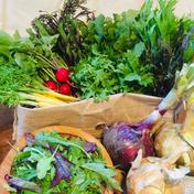 【夏ギフト】有機ファームえんのもりもりっ!野菜セット 80サイズ 野菜(セット・詰め合わせ) 通販