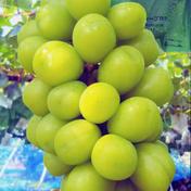 #イチ推し!【長野県産 完熟シャインマスカット】1.1kg 2房(計1.1kg) 果物(ぶどう) 通販