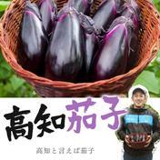お待たせしました♫感動✨高知茄子🍆 1.5kg 約15本位 高知県 通販