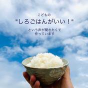 令和3年度産 淡路島新米コシヒカリ 10㎏ (5㎏×2) 米 通販