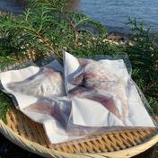 島のごちそう 獅子島産真鯛(養殖)カマ 1対×4パック
