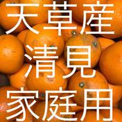 清見 家庭用 10kg  箱込10kg  果物(柑橘類) 通販