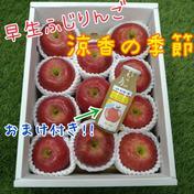 早生ふじりんご「涼香の季節」♪おまけ付き♪ 3kg箱入り 果物や野菜などのお取り寄せ宅配食材通販産地直送アウル