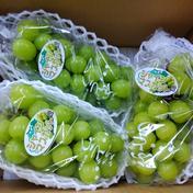 マルダイ大場農園のぶどう 家庭用シャインマスカット3房入り(約1.5kg) 約1.5kg 果物や野菜などのお取り寄せ宅配食材通販産地直送アウル