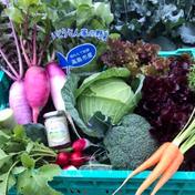 高島農産(ないとうさん家の野菜) いつものサラダをご馳走に!湖国の新鮮 旬便り〜ないとうさん家の野菜にタルタル発売記念〜 5kg以内