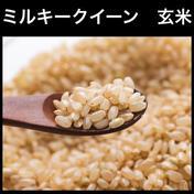 【新米】ミルキークイーン 5kg【玄米】 5kg キーワード: お試し 通販