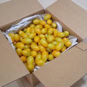 発送再開◎トマ糖◎黄色のティポ※太陽のめぐみフルーツトマト 1kg 山梨県 通販