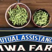 黒豆VS茶豆! 枝豆総選挙‼ 枝豆(黒豆)900g枝豆(茶豆)900gの食べ比べセット 1.8kg 野菜(豆類) 通販