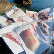 島のごちそう 獅子島産真鯛(養殖)1匹丸ごと食べちゃえセット