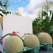 松本メロン農園の【赤肉】富良野メロン(3玉入り) 1玉1.6kg〜1.99kg 果物(メロン) 通販