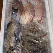 1日3箱限定✨送料込み✨鮮魚セット3㎏前後🐟️🦑 2~3㎏ 果物や野菜などのお取り寄せ宅配食材通販産地直送アウル