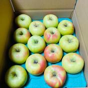 黄色リンゴ ぐんま名月 ご家庭用約5キロ 約5キロ 沼沢果樹園