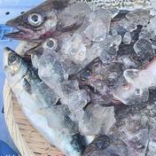 漁師の店 漁師の店 その日取れたて海産物BOX 2.5キロ