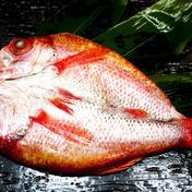 のどぐろ一夜干1枚(Sサイズ約150g) 約150g Hamaurasuisan