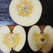 【限定品】青森県藤崎産 蜜入り!昔ながらの葉とらずサンふじ3㌔ 3kg 青森県 通販