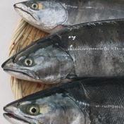 漁師の店 北海道産本マス 2kg