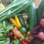 初夏だ!京野菜の満足セット! 10キロ以下 100サイズ 京都府 通販