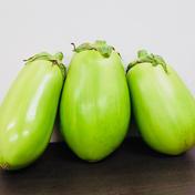 【白丸なす / トロなす】 --- 6個入り 1.2~1.5kg 6個入り 1.2~1.5kg 野菜(茄子) 通販