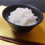 山形県産特別栽培米 つや姫 (精米)5kg 5kg 山形県 通販