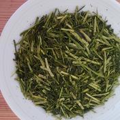 【レターパックプラスでお届け!】くき茶好きな方必見☆くき茶300g2個セット 大サイズ 300g×2個 お茶(緑茶) 通販