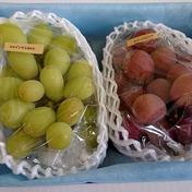 【2種食べ比べ】石鎚の宝BOX 1㎏ 果物(ぶどう) 通販