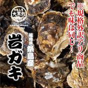 【訳あり商品】数量限定!トロ~り甘い!糸島岐志産生食用岩ガキ・規格外詰め合わせセット(5kg相当) 5kg 魚介類(牡蠣) 通販