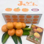 こだわり栽培 完熟有田みかん 3kg(L・Mサイズ) 3kg 果物(みかん) 通販