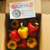 完熟パプリカ「和ぷりか」1kg(小ぶりが多いです) 1kg 果物や野菜などのお取り寄せ宅配食材通販産地直送アウル