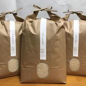 【玄米】北海道厚沢部町産えみまる玄米10kg 10kg 果物や野菜などのお取り寄せ宅配食材通販産地直送アウル