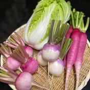 三浦産!ミニ白菜と根菜セット 約3kg 果物や野菜などのお取り寄せ宅配食材通販産地直送アウル