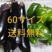 【お試し】60サイズ送料無料✨長ナスとピーマンの詰め合わせ😂 1㎏ 野菜(セット・詰め合わせ) 通販