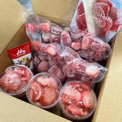THE!まるごと2袋&けずりいちご3カップ🍓フローズン堪能セット! 500g×2袋+3カップ 計5個 もぐはぐ農園