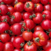 中玉トマト フルティカ 無選別たっぷり2kg 2kg 野菜(トマト) 通販