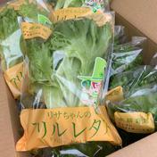 【ご家族様向け】たっぷりシャキシャキ水耕レタス(1.5キロ) 約1.5kg(15袋) 野菜(レタス) 通販