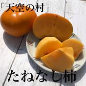 たねなし柿(ご家庭用)2Kg 和歌山、天空の村 小箱(約9-14個入、2kg) 果物(柿) 通販